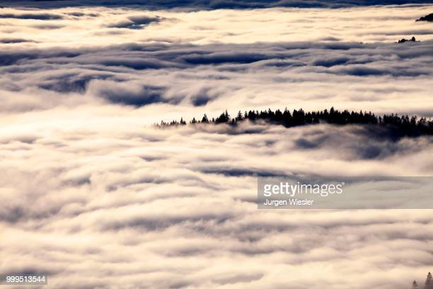 forest above the cloud level, view from the feldberg, inversion, black forest, baden-wuerttemberg, germany - inversion_(meteorology) stock pictures, royalty-free photos & images