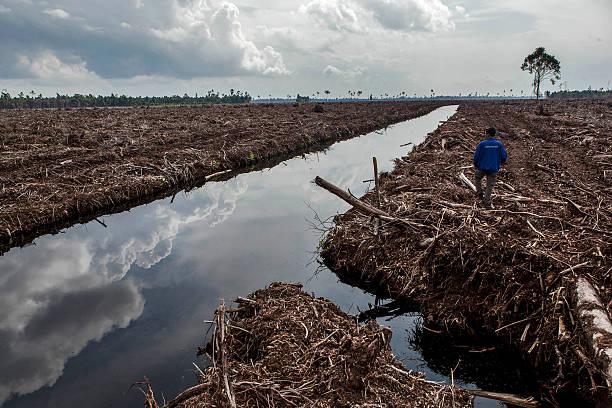 Pekanbaru Sumatra, Indonesia