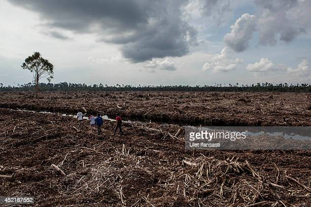 Forest activists and local communities inspects land clearing and drainage of peat natural forest located on the concession of PT RAPP a subsidiary...