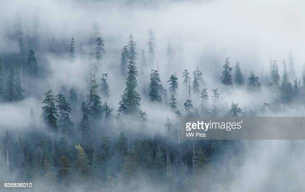 Forest and fog above Hoh River from Spruce Nature Trail Olympic National Park Washington