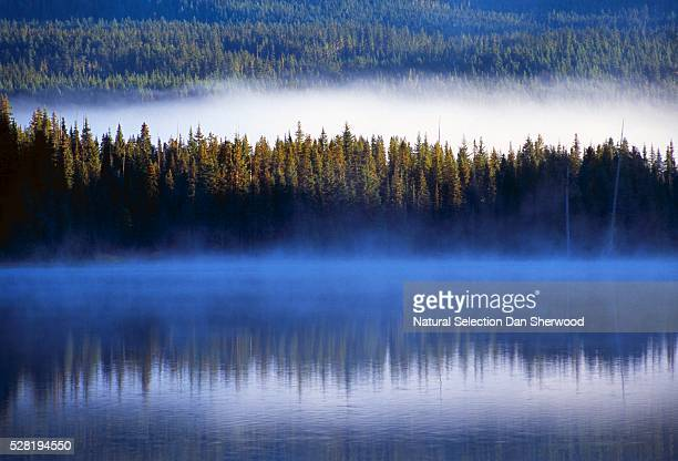 forest and fog reflected in trillium lake - dan sherwood photography stock pictures, royalty-free photos & images