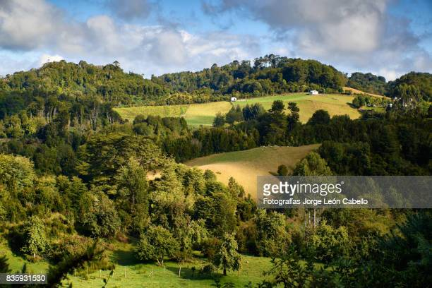 forest and grass fields over the rolling hills of lemuy island - foresta temperata foto e immagini stock