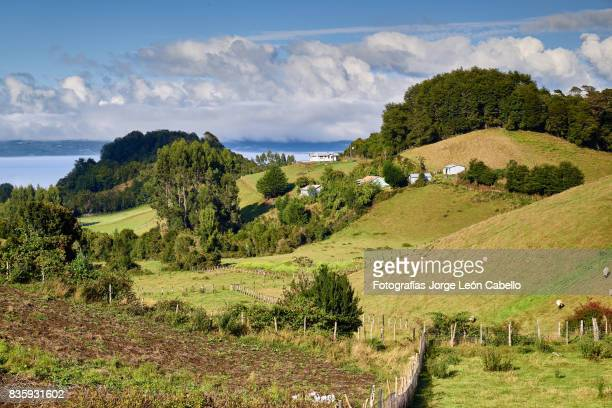 forest and grass fields over the rolling hills of lemuy island - chilean lake district stock photos and pictures