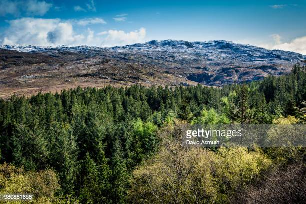 Forest and hills, Kyle of Durness, Sutherland, Scotland, UK