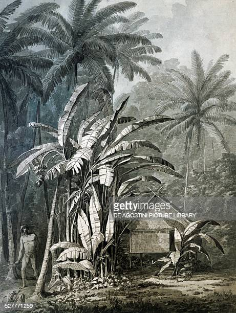 Forest and hut on an island engraving from a drawing by John Webber from the account on the last journey of James Cook Polynesia 18th century