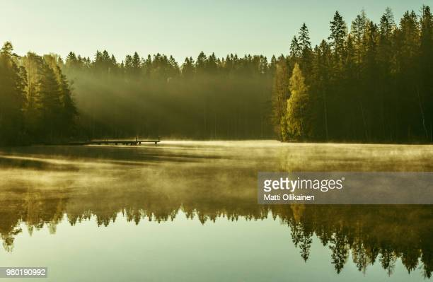 forest and lake at sunrise, hervanta, tampere, finland - tampere finland stock pictures, royalty-free photos & images