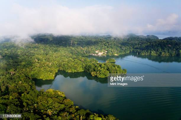 forest and lake - panama stock pictures, royalty-free photos & images