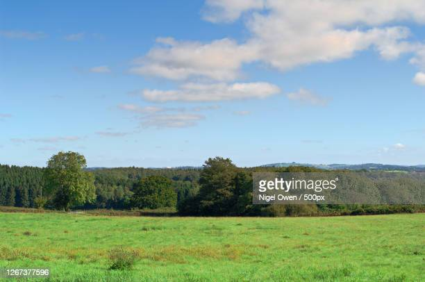 forest and meadow landscape - nigel owen stock pictures, royalty-free photos & images