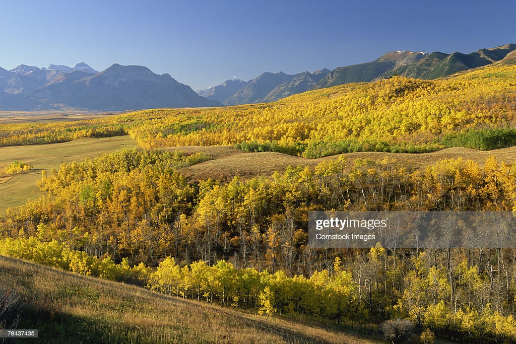 Forest and mountains : Stockfoto