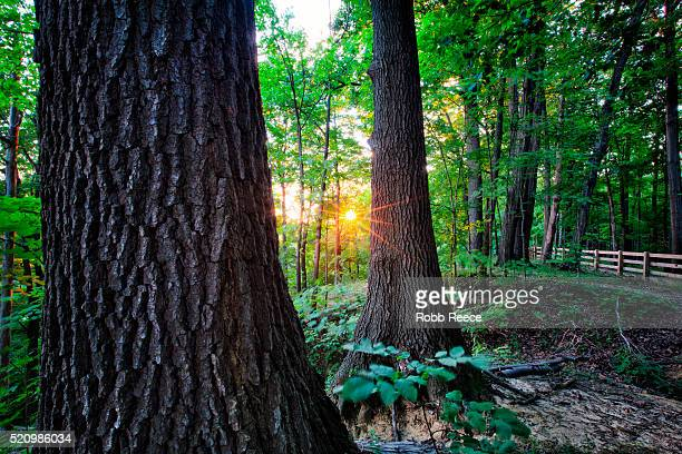 forest and sunset through the trees near the rocky river in ohio - robb reece fotografías e imágenes de stock