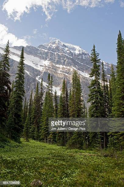 A Forest And The Canadian Rocky Mountains