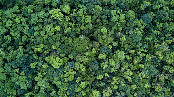 Forest and tree landscape texture background, Aerial top view forest, Texture of forest view from above. 1126410337