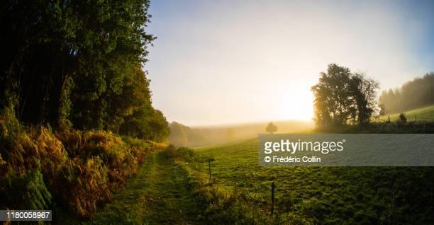 forest at autumn - belgië stockfoto's en -beelden