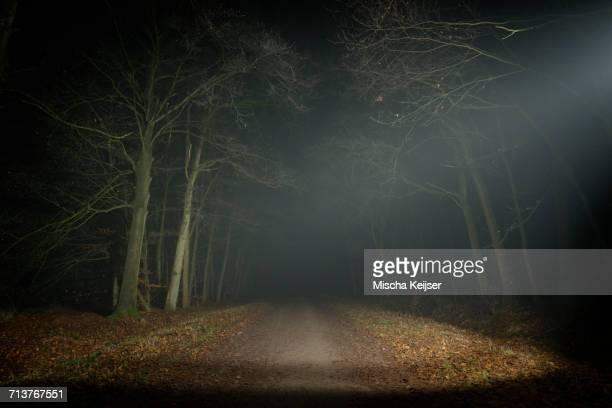 forest at night, breda, north brabant, netherlands - ominous stock pictures, royalty-free photos & images