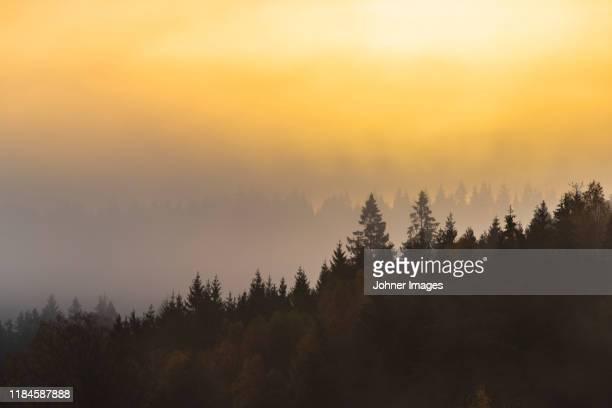 forest at sunrise - västra götalands län stockfoto's en -beelden