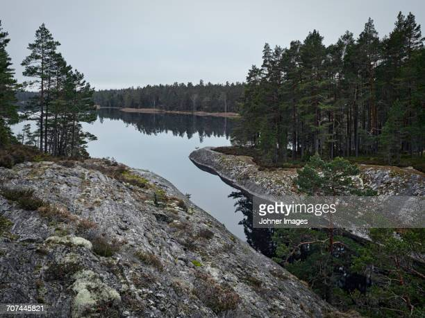 forest at water - dalsland stock photos and pictures