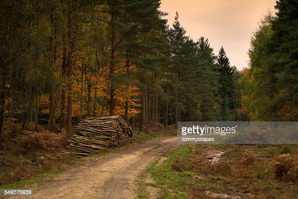 forest autumn scene - track imprint stock photos and pictures