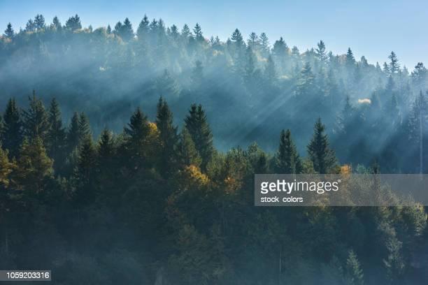 sfondo foresta nella stagione autunnale - romania foto e immagini stock