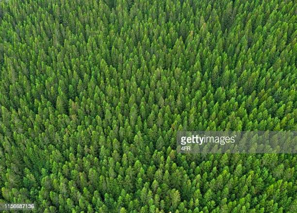 forest background, norway - pine woodland stock pictures, royalty-free photos & images