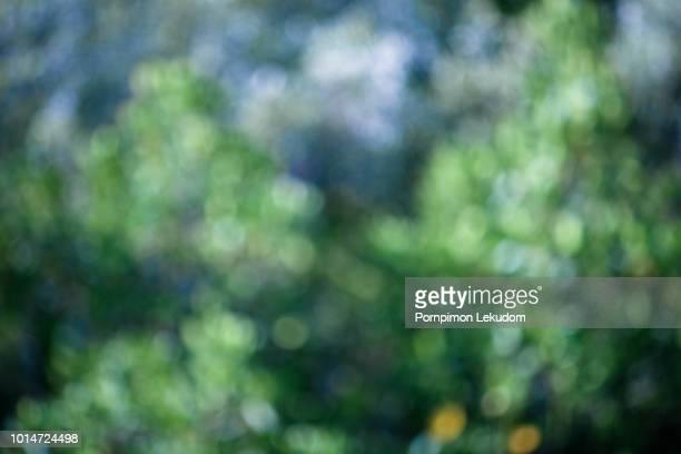forest bokeh, lens effect - セレクティブフォーカス ストックフォトと画像