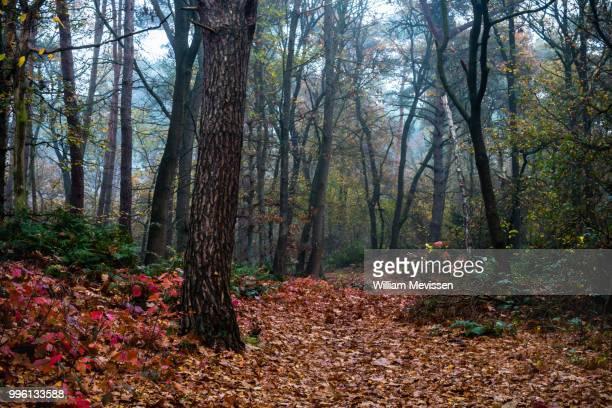 forest bridle path - william mevissen - fotografias e filmes do acervo