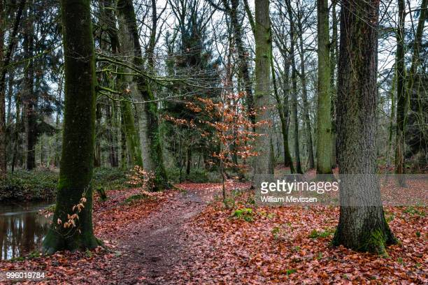 forest brook path - william mevissen stock pictures, royalty-free photos & images