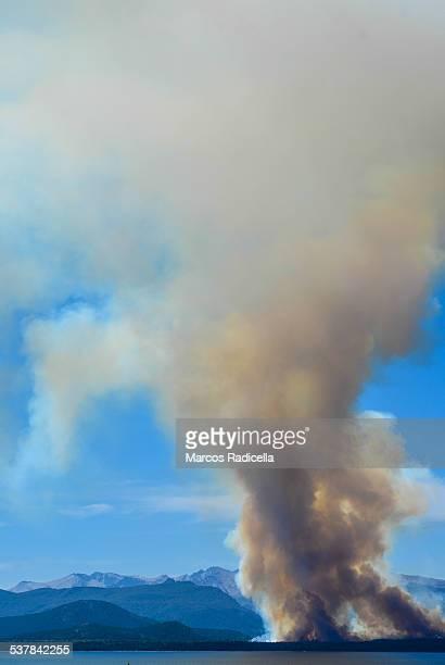 forest burning in patagonia - radicella stockfoto's en -beelden