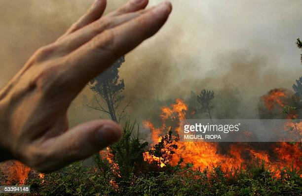 A forest burns close the village of Sa in Moncao northern Portugal 450 km from Lisbon 15 August 2005 Wildfires broke out once again across the...