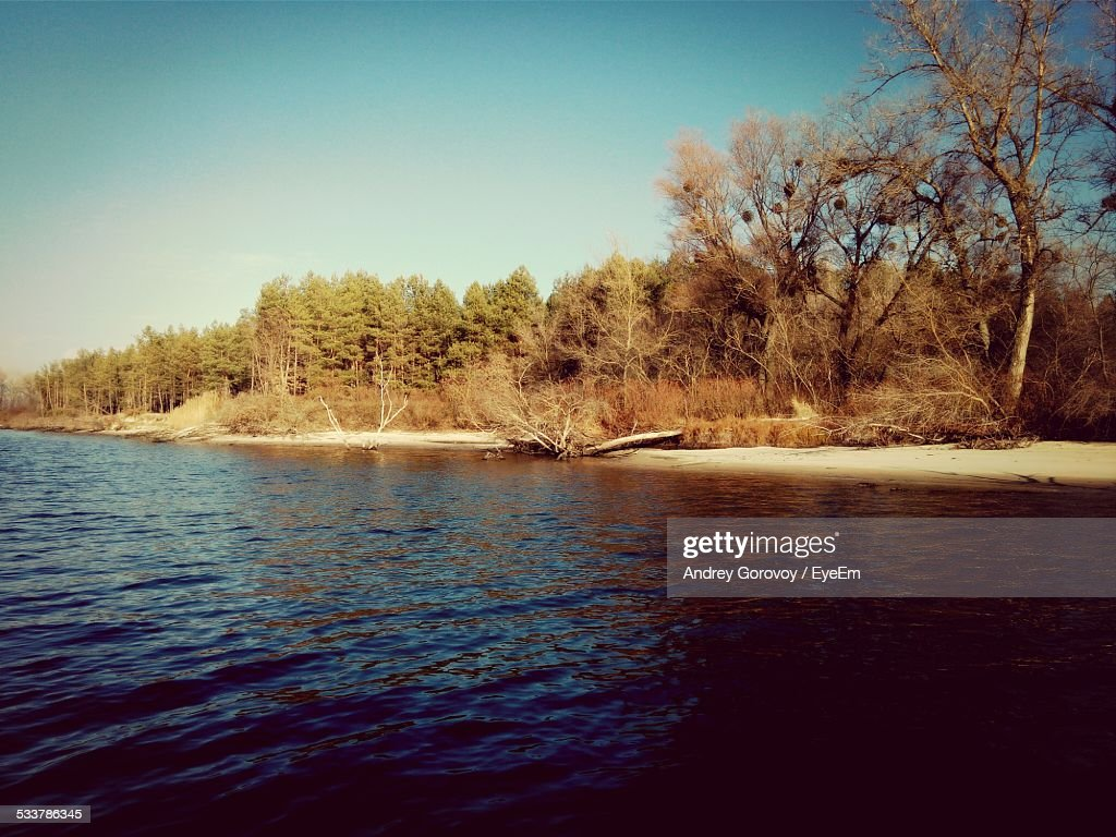 Forest By Lake : Foto stock