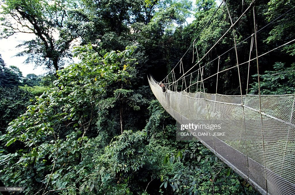 Forest canopy walkway Manuel Antonio National Park Costa Rica. & Forest canopy walkway... Pictures | Getty Images