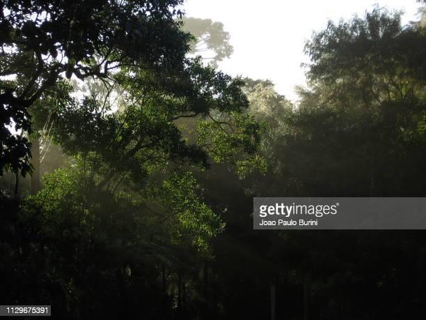 forest canopy with light rays - mata atlantica stock-fotos und bilder