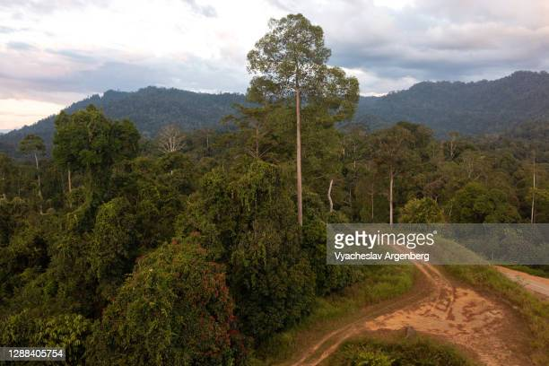 forest clearings in maliau basin, sunset time, borneo, malaysia - argenberg stock pictures, royalty-free photos & images
