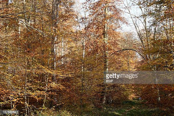 Forest Compiegne Forest In Autumn.Picardy, France.
