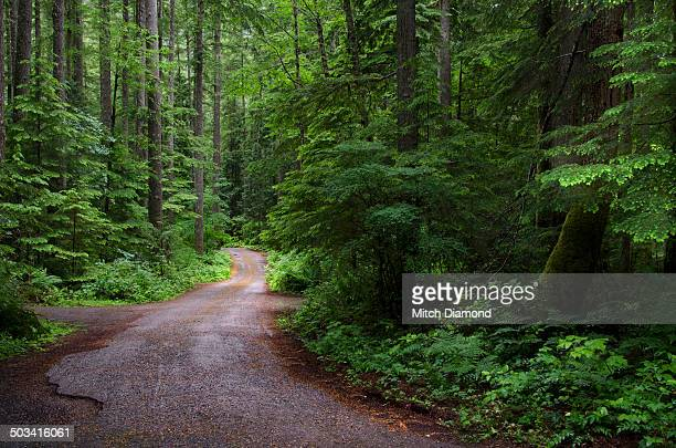 forest country road