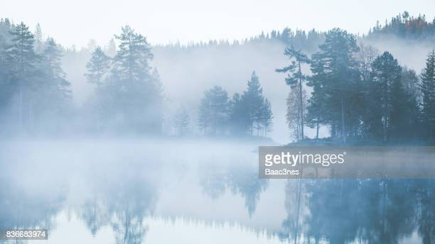 forest covered in morning mist - fog stock pictures, royalty-free photos & images