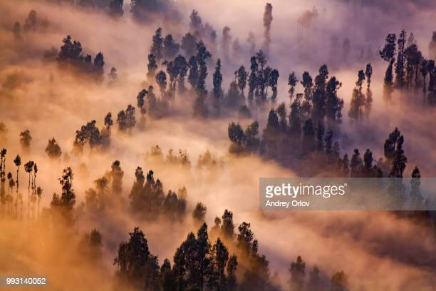 a forest covered with sulfur smoke and fog near mount bromo in java, indonesia. - tengger stock pictures, royalty-free photos & images