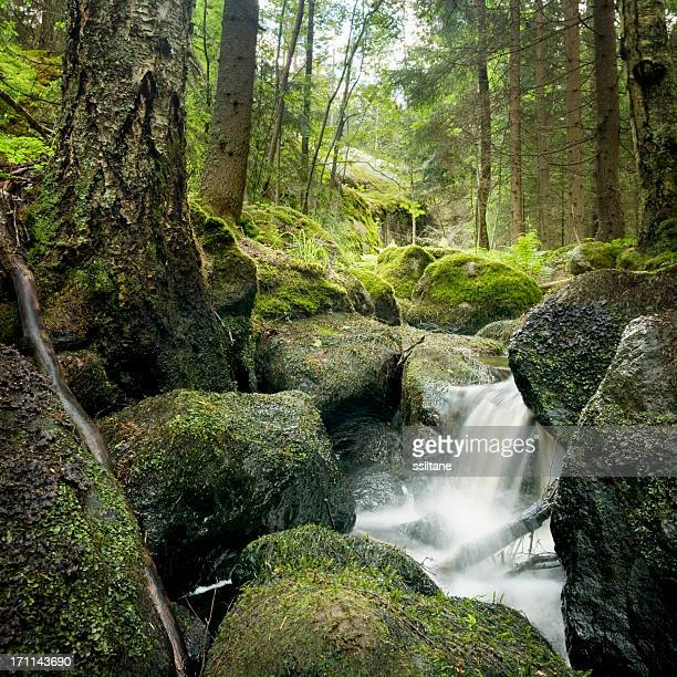 Forest Creek Scandinavia