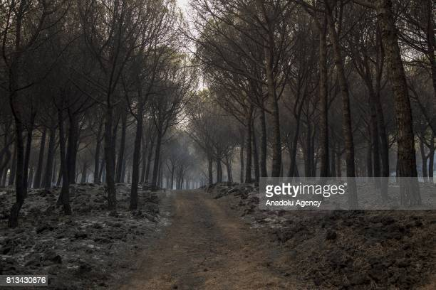 A forest damaged by a fire on the slopes of the Vesuvius volcano in east of Naples is seen in Boscotrecase Italy on July 12 2017 Italian firefighters...