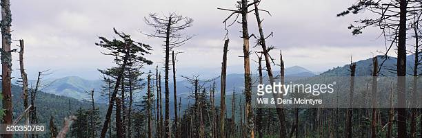 forest damaged by acid rain - acid rain stock pictures, royalty-free photos & images