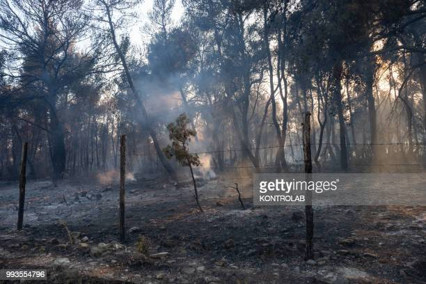 POLLINO VILLAPIANA CALABRIA ITALY A forest destroyed during a huge fire that destroyed a vast area of woods pine forests and Mediterranean vegetation...