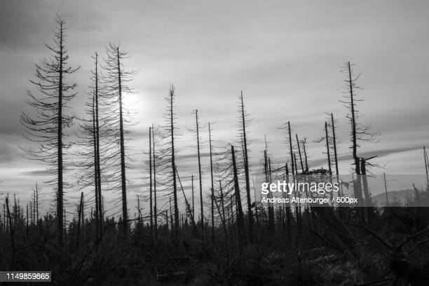 forest dieback - acid rain stock pictures, royalty-free photos & images