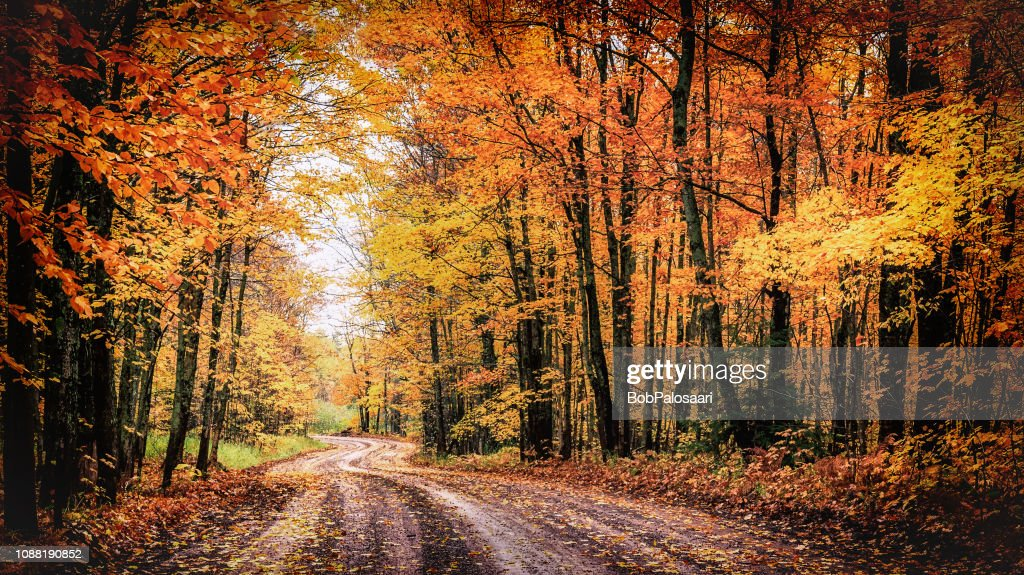 Forest Drive in Autumn. The Covered Road in Michigan's Houghton County. : Stock Photo