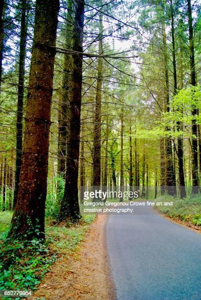 forest drive - gregoria gregoriou crowe fine art and creative photography. foto e immagini stock