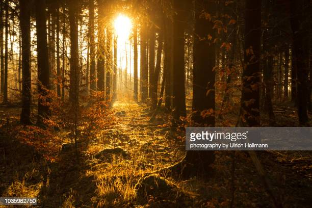 forest during autumn, baden württemberg, germany - エウロパ ストックフォトと画像