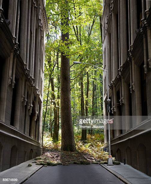 forest encroaching on city street - out of context stock pictures, royalty-free photos & images