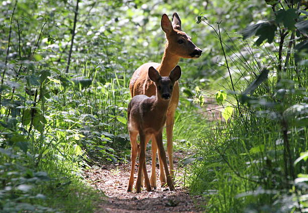 Forest Fawn Wall Art