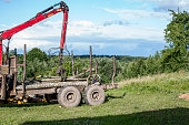 forest felling concept unloading firewood from