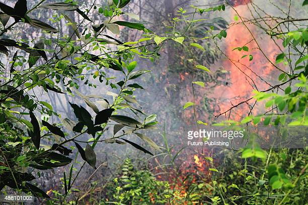 Forest fire as seen on September 13 2015 in Riau Indonesia The thick haze has forced the repeated cancellation of flights and pushed air quality to...