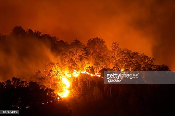 Forest fire at night with bright flames