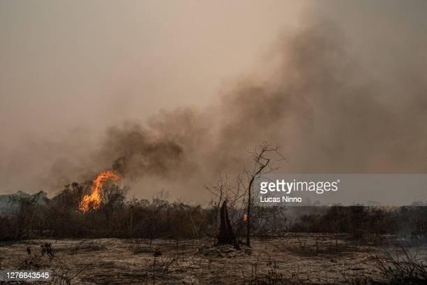 forest fire burning the pantanal wetlands - marais de pantanal photos et images de collection